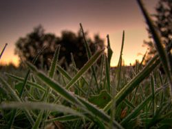 Frosted Grass at Dawn